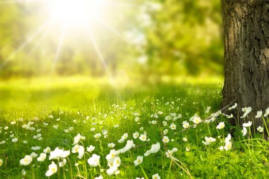 image of Fresh air